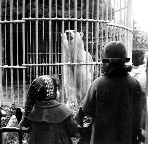 oso-blanco-retiro